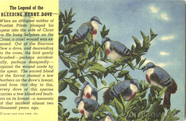 The Legend Of The Bleeding Heart Dove Birds
