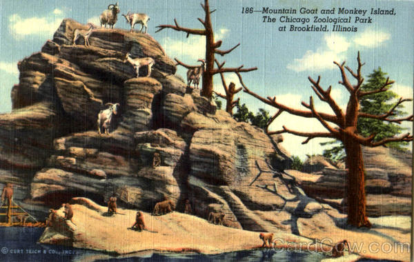 Mountain Goat And Monkey Island, The Chicago Zoological Park Brookfield Illinois