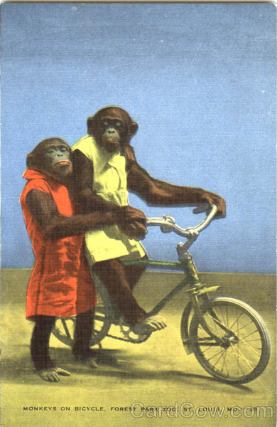 Monkey On Bicycle, Forest Park Zoo St. Louis Missouri