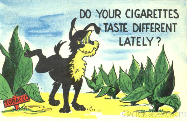 Do your cigarettes tastes different lately dogs tobacco