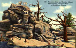Mountain Goat And Monkey Island, The Chicago Zoological Park