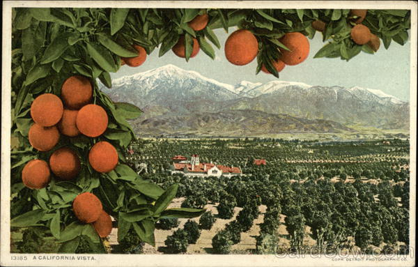 A California Vista - Orange Grove Fruit