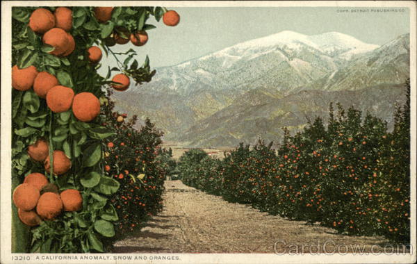 A California Anomaly, Snow and Oranges Fruit