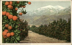 A California Anomaly, Snow and Oranges