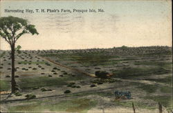 Harvesting Hay, T. H. Phair's Farm