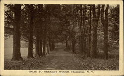 Road to Greeley Woods
