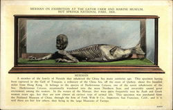 Merman on Exhibition at the Gator Farm and Marine Museum