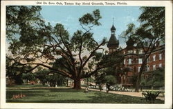 Old De Soto Oak, Tampa Bay Hotel Grounds