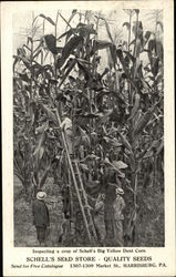 Inspecting a Crop of Schell's Big Yellow Dent Corn