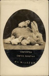 """Contented Easter Greetings"""