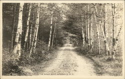 Thru the Birch Road, Intervale N. H.