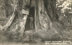 Giant Redwood Stump, Big Tree Park
