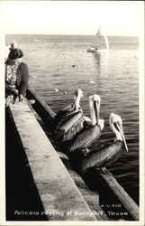 Pelicans Resting on a Pier at Rockport, Texas