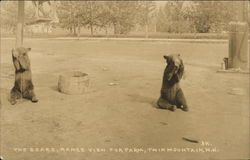 The Bears at Range View Fur Farm, Twin Mountain, New Hampshire