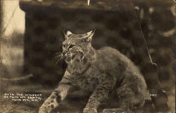 The Wildcat at Twin Mt. Camps