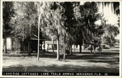 Lakeside Cottages by Lake Tsala Apopka