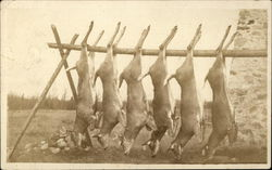 Five Deer Hung on Rack