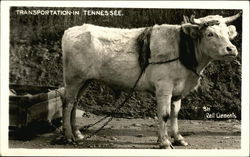 Transportation-In Tennessee