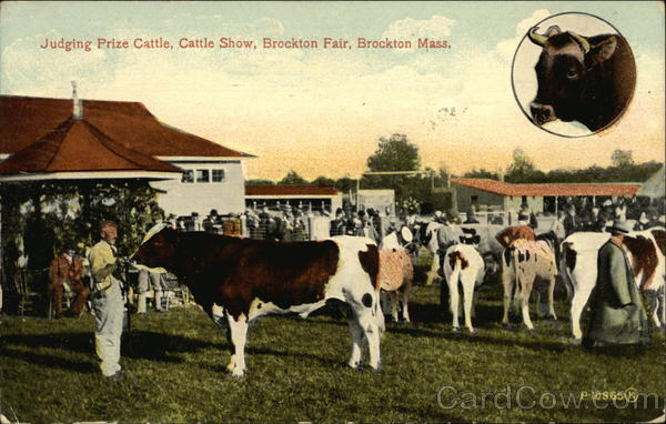 Judging Prize Cattle Brockton Massachusetts