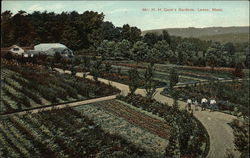 Mr. H.H. Cook's Gardens