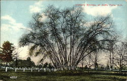 View of Historic Birches Postcard