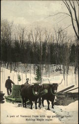 Making Maple Sugar - A Pair of Vermont Oxen with Sap Gathering Tank.