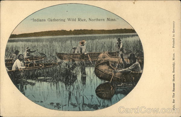 Indians Gathering Wild Rice, Northern Minn. Native Americana