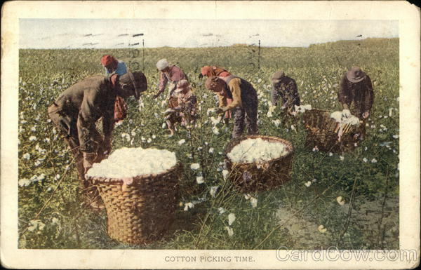 Cotton Picking Time Black Americana 1907 Jamestown Exposition