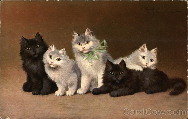 5 Cute Kittens Cats