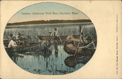 Indians Gathering Wild Rice, Northern Minn.