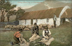 Sheep Shearing in Connemara