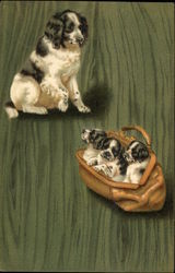 Black and White Dog With Three Pups In A Purse