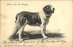 Gruss aus den Bergen - Greetings from the Mountains- St. Bernard Dog