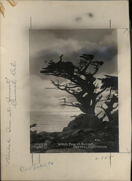Witch Tree at Sunset Rare Original Photograph Layout Board 2155 Carmel California