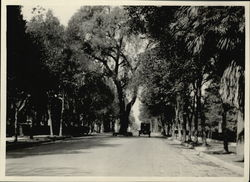 Tree-lined Street Rare Original Photograph