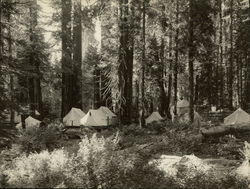 Camp Sierra Giant Forest Rare Original Photograph