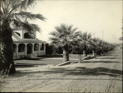 Orange Grove Rare Original Photograph