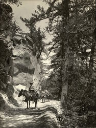 Man Riding Horse on Trail up Mt. Wilson