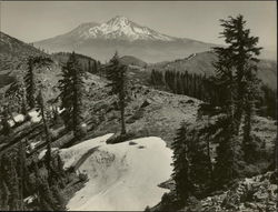 Mt. Shasta From Near the Crags Original Photograph