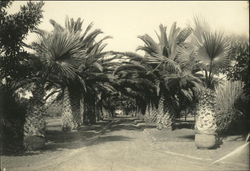 Royal Palm Lined Street