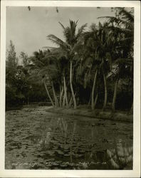 One of the Lagoons Original Photograph