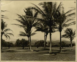 Lawn With Palm Trees