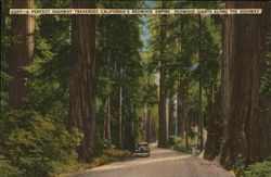 A Perfect Highway Traverses California's Redwood Empire