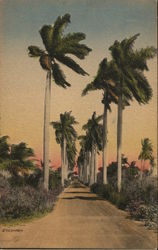 An Avenue of Royal Palms Leading Down to the Bay in Florida