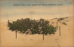 Buried Apple Tree, Desert of Maine