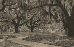 Live Oak Walk, Brookgreen Gardens