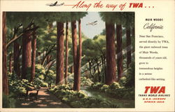TWA Redwood Tree Grove, Muir Woods