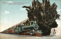 Comparative sizes of the Fallen Monarch big tree and a Southern Pacific passenger train.