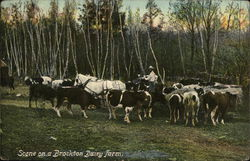 Scene on a Dairy Farm