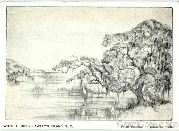 White Herons Pawleys Island South Carolina